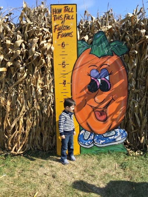 pumpkin-patch-11