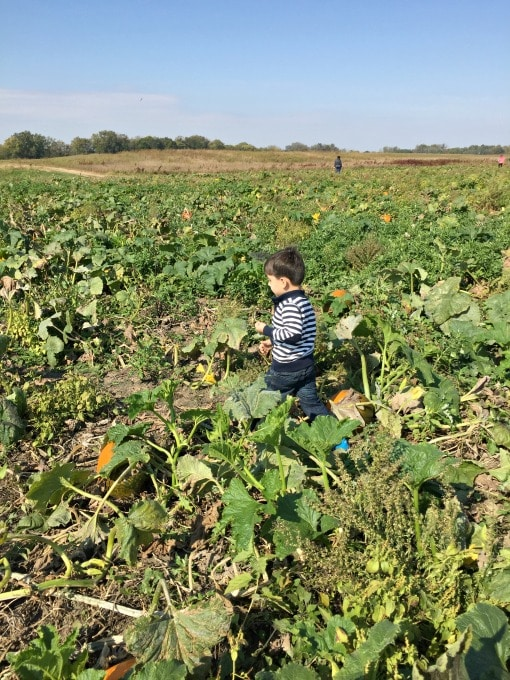 pumpkin-patch-8