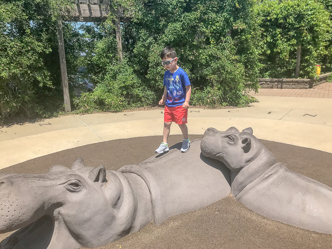 7 Ways to Make Family Memories at the Cincinnaiti Zoo