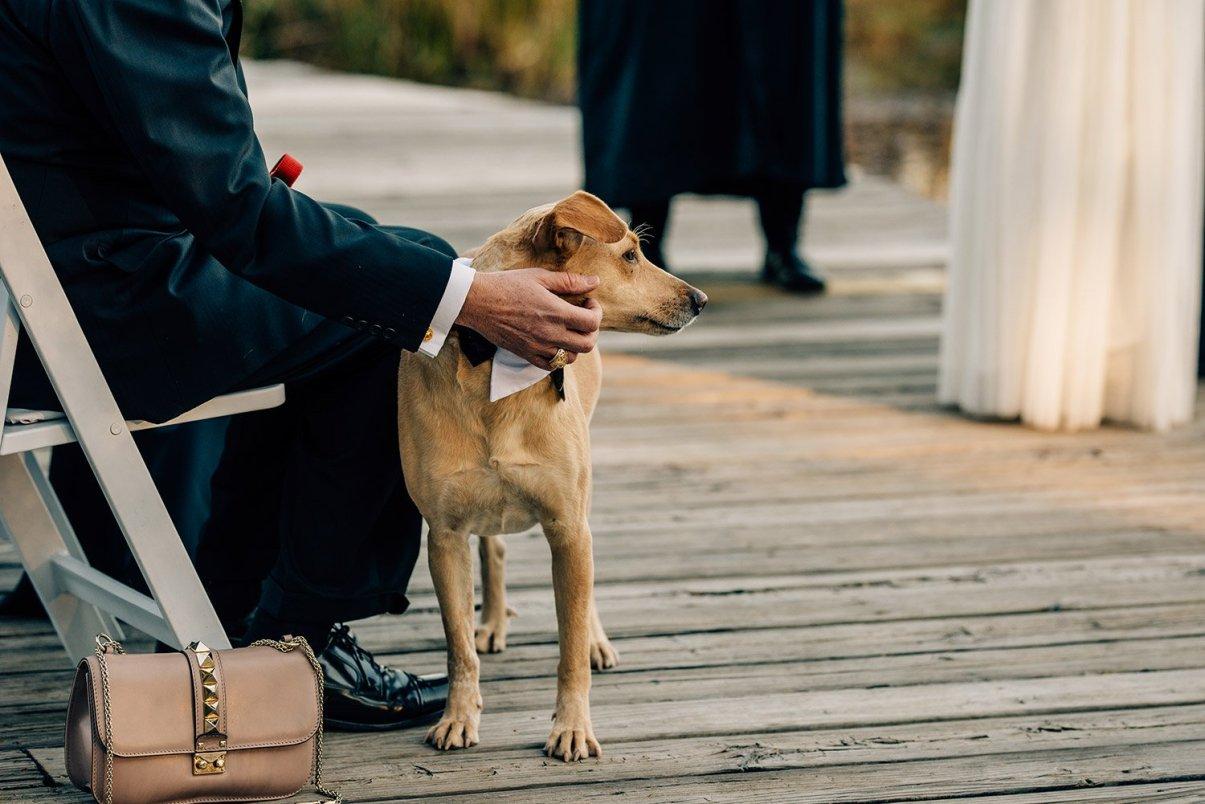 dog at a wedding