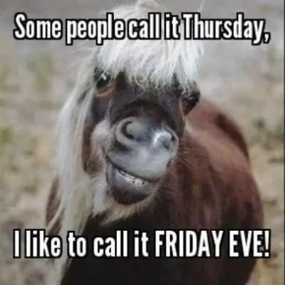 Thursday Animal Meme
