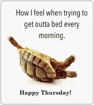 Thursday Morning Memes