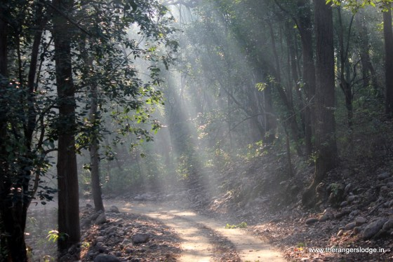 Jungle Safari in corbett