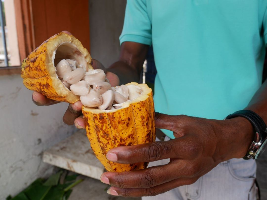 Grenada Chocolate Festival: the Ultimate Guide