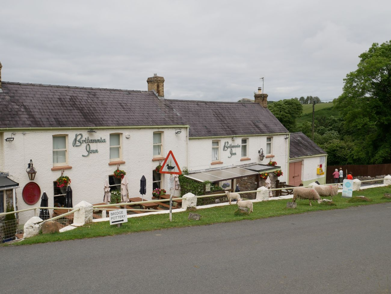 Britannia Inn in the Gower pictured from the front, with sheep grazing on the grass