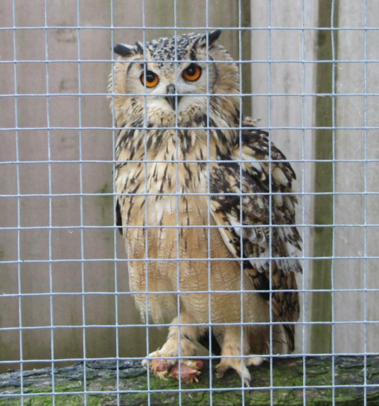 Hatton World Autumn 2014 owl