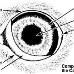 Canine Eye Diagram Wiring Kia Carnival Jack Russell Terrier Jrtca: Medical - In A Dog's