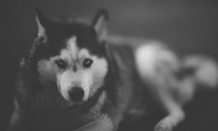 Freelensing the dogs and not winning
