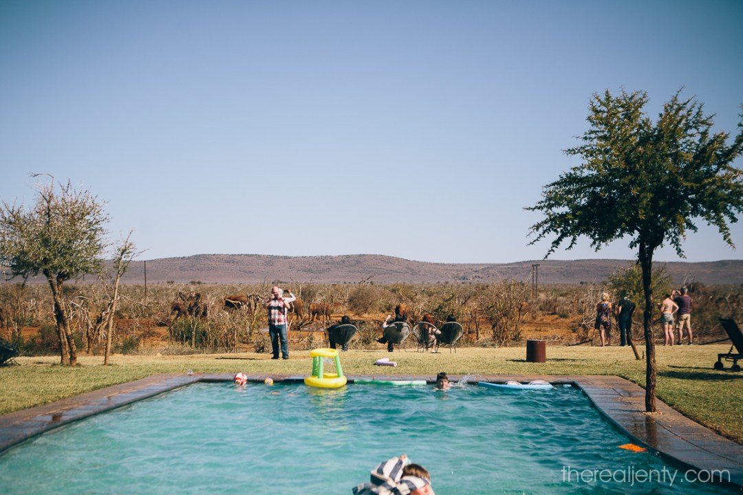 Madikwe Safari Lodge w 080