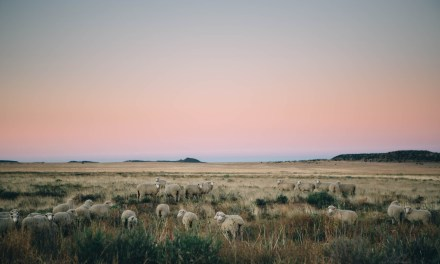 One night in the Karoo