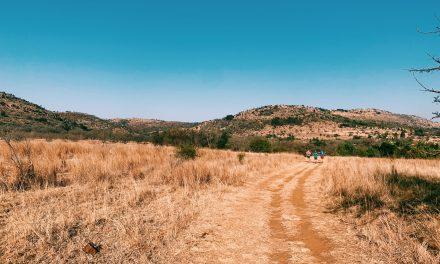 Started trail running around Jozi