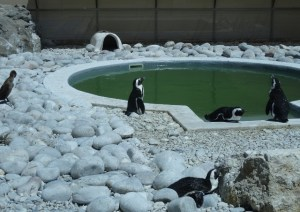 Penguin rehab centre – enclosure