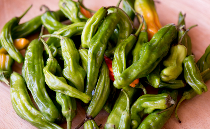 Besides being really fun to say, Shishito Peppers are super easy and delicious. They'll be your new favorite appetizer! | The Recipe Wench