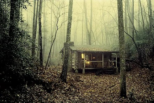 Cabin stands alone in dim woods