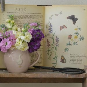 Vintage Books at The Reed Warbler Shop