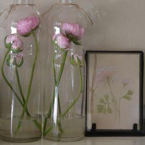Botanical items at The Reed Warbler Shop