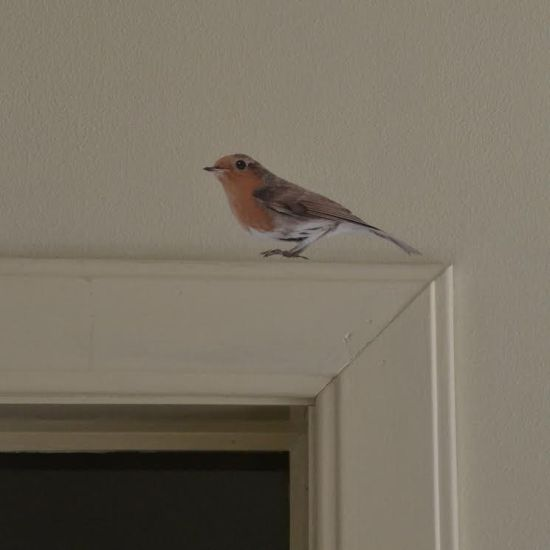 wall sticker robin