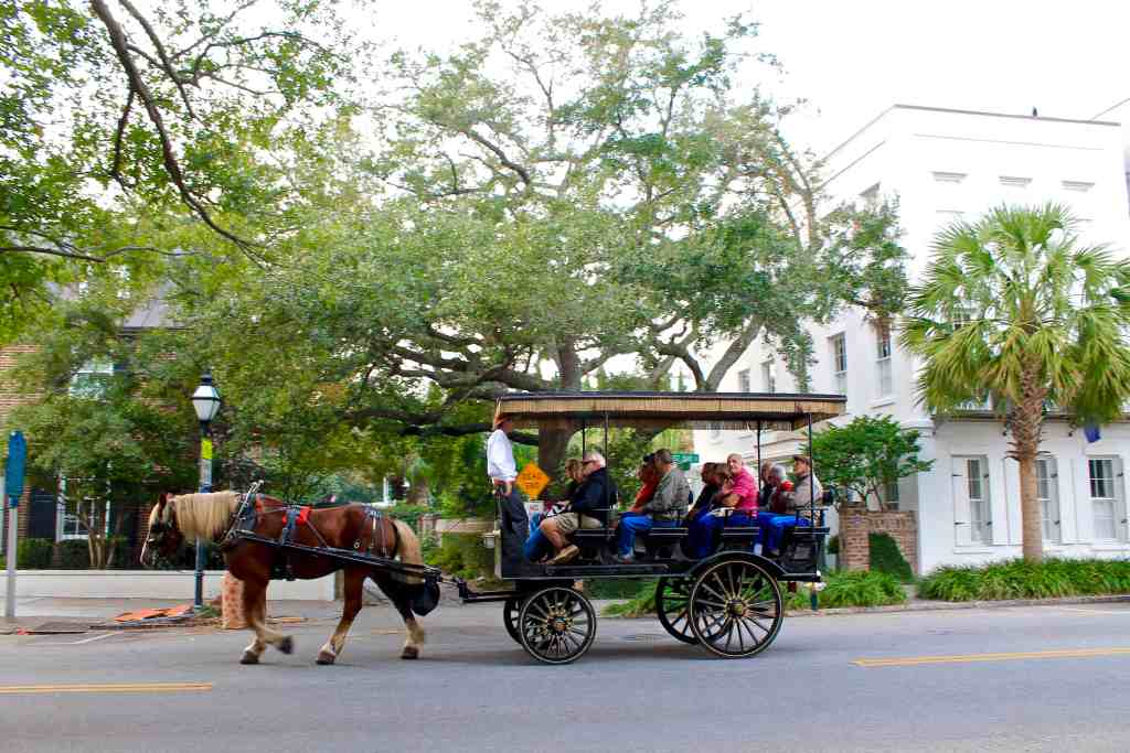 Ultimate Guide to Charleston   The Republic of Rose