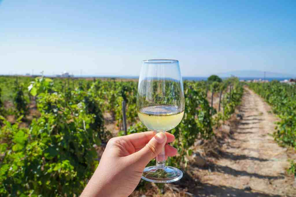 WINE TASTING AT DOMAINE SIGALAS IN SANTORINI