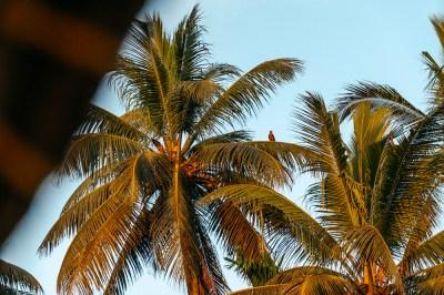 Palme India Kerala