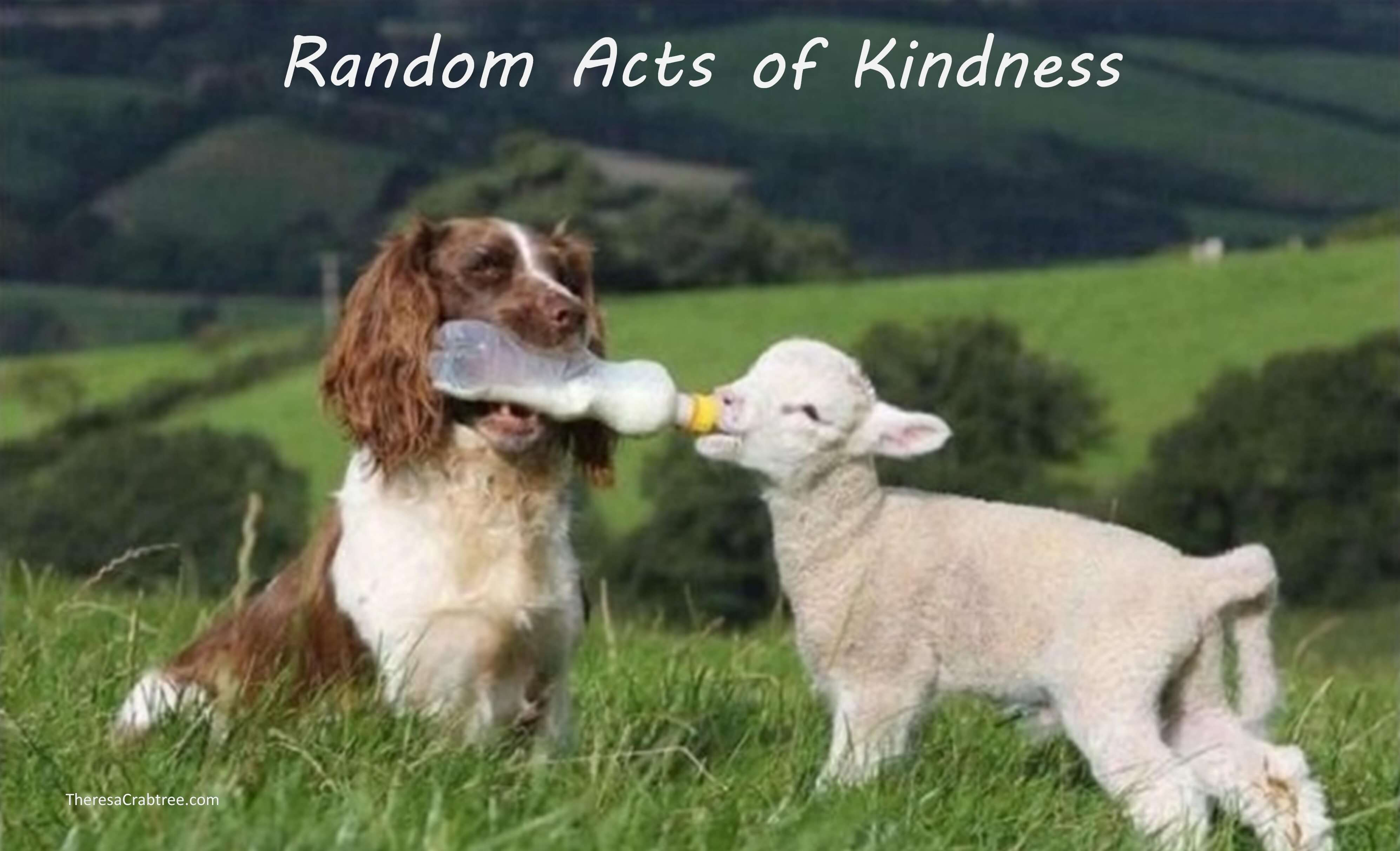 Soul Connection 105 ~ Random Acts of Kindness
