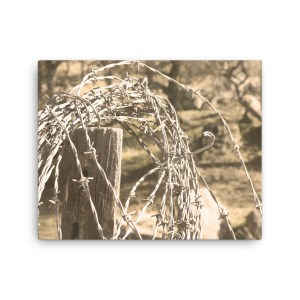 Barbed Wire Canvas, 3 sizes