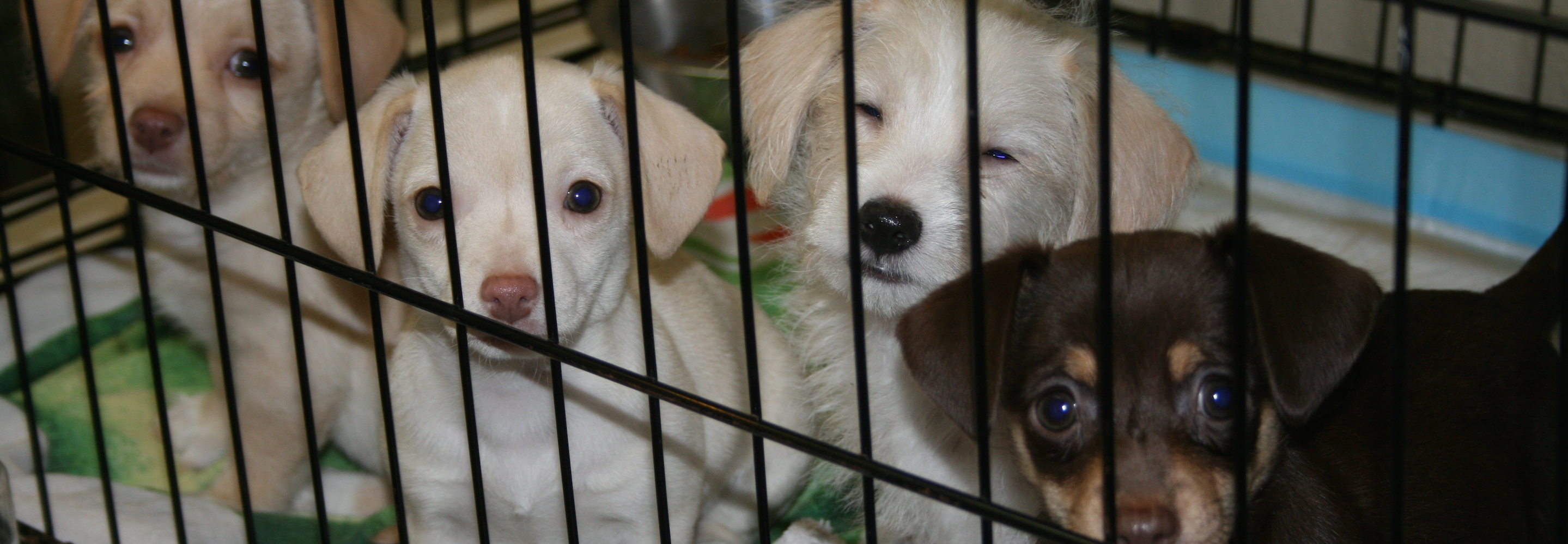 Rescued Pups