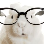 Glasses-Rabbit