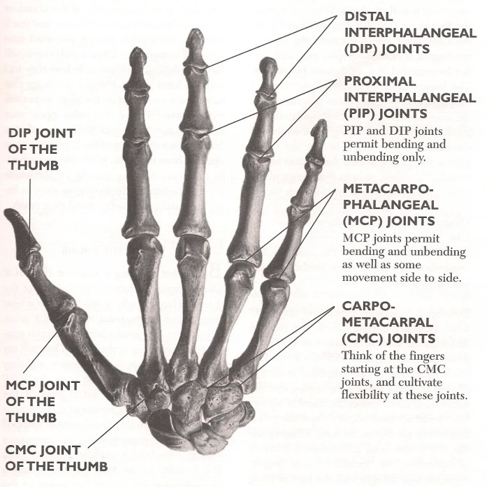 joints hand fingers markp93