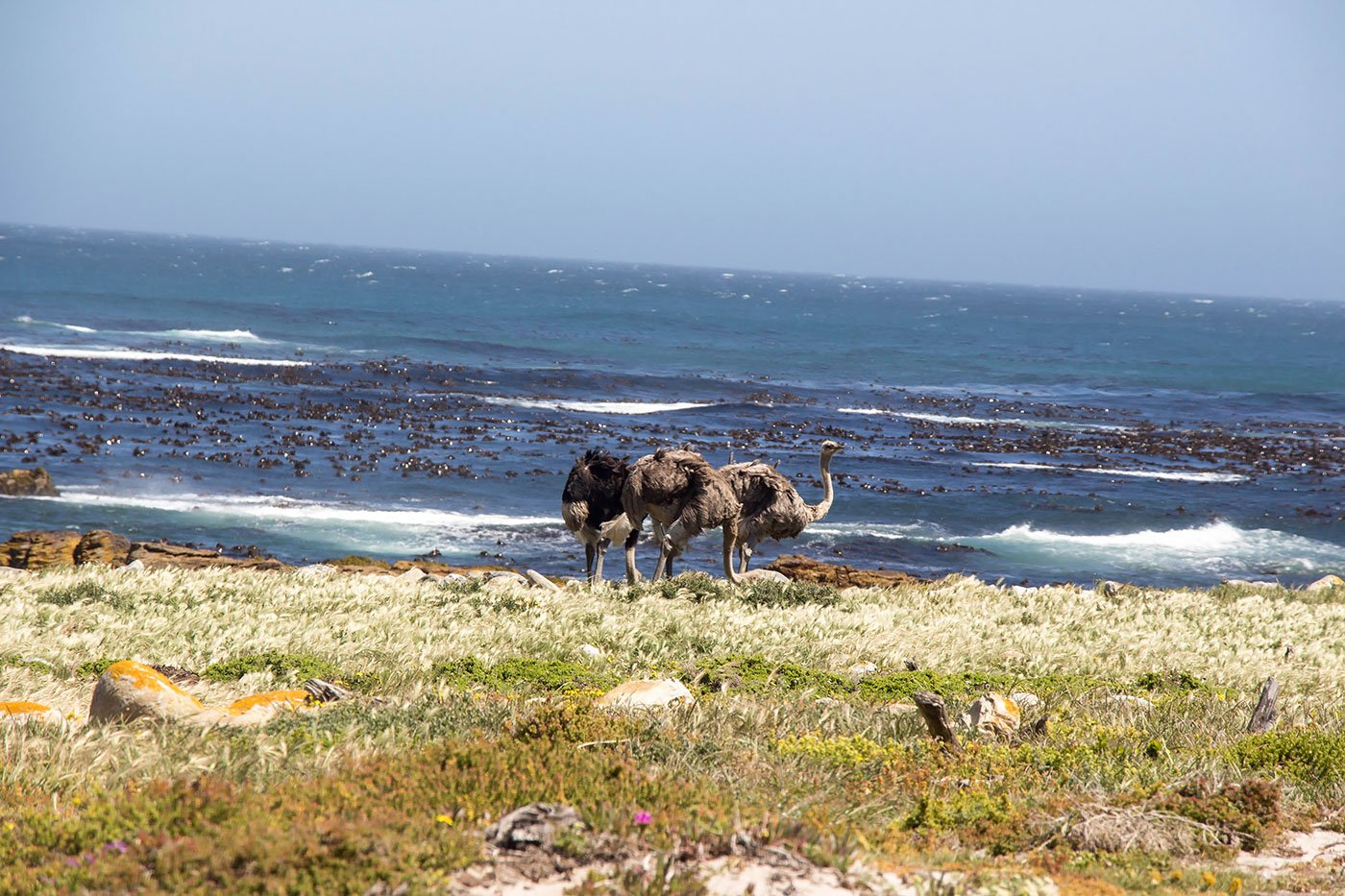 Wine and Wildlife: 3 Day Trips From Cape Town - There's wildlife everywhere, even ostriches on the side of the road.