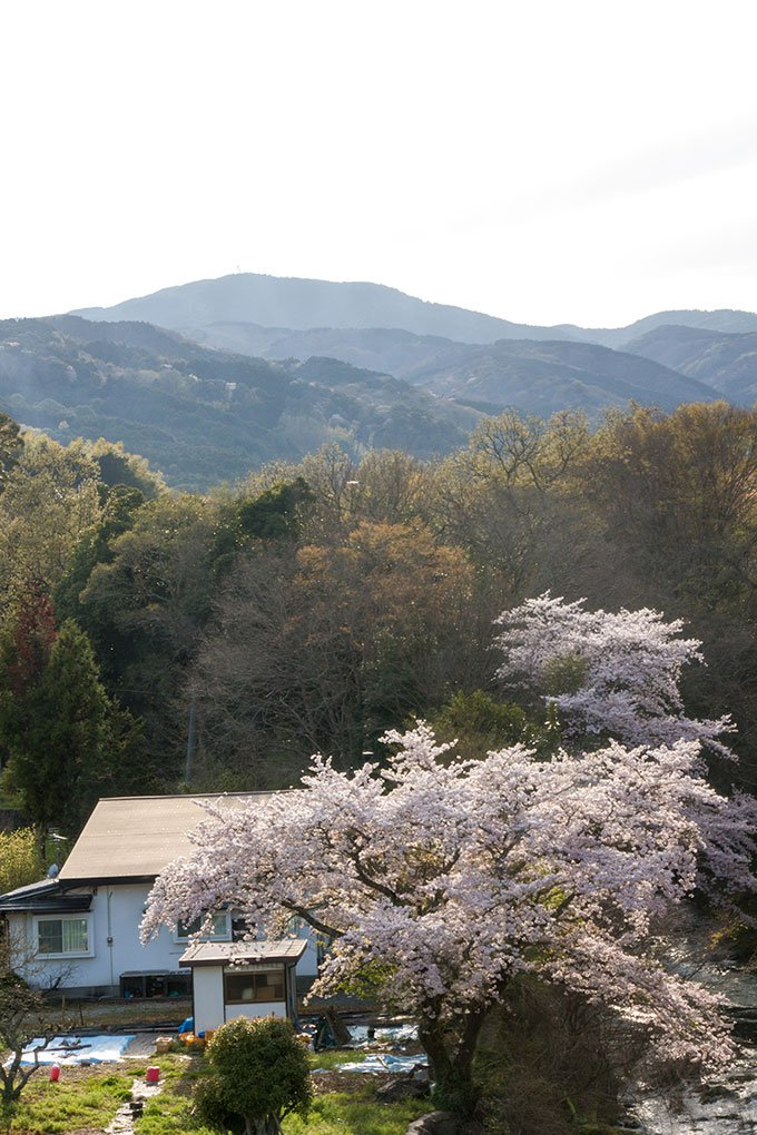 Cherry blossom and mountain view from traditional Japanese ryokan.
