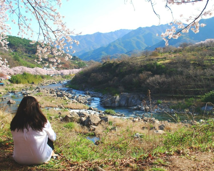 Hwagae Cherry Blossoms Festival