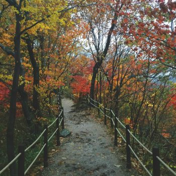 Check out one of the best places to see fall foliage and enjoy fresh air in Korea.... Naejangsan! Near Jeonju, it's well worth the visit rain or shine.