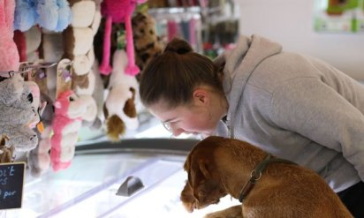 dog-in-shop-2