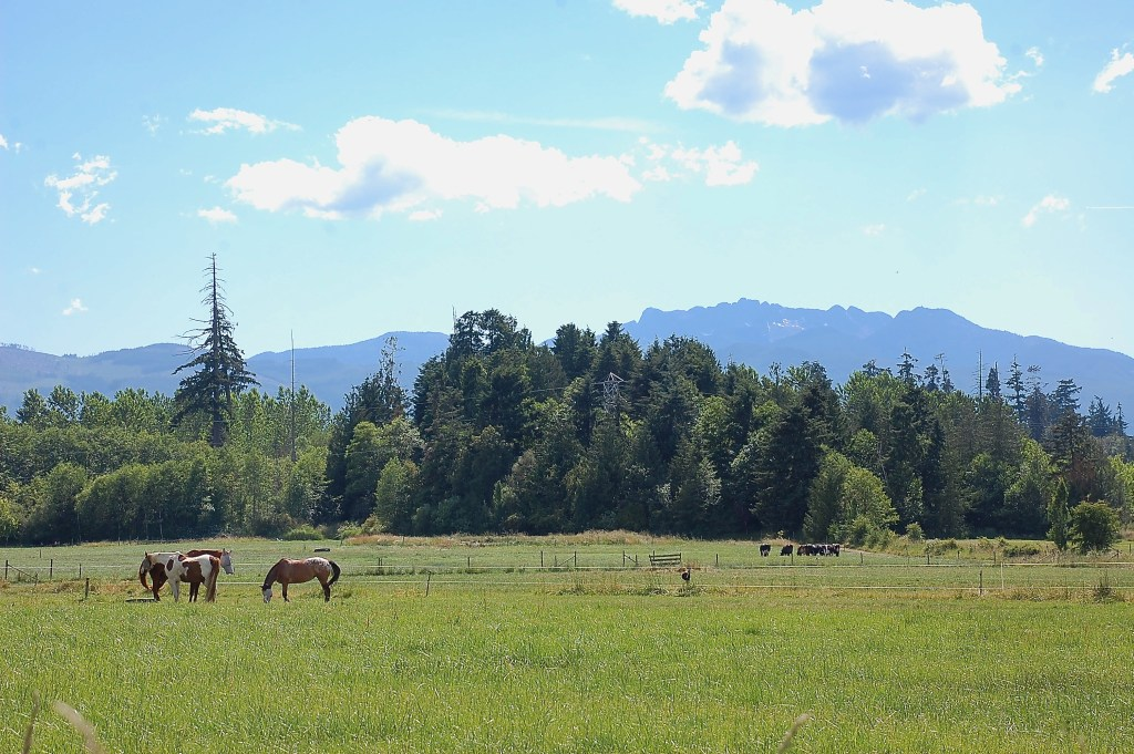Morningstar Farm, Vancouver Island | theringers.co