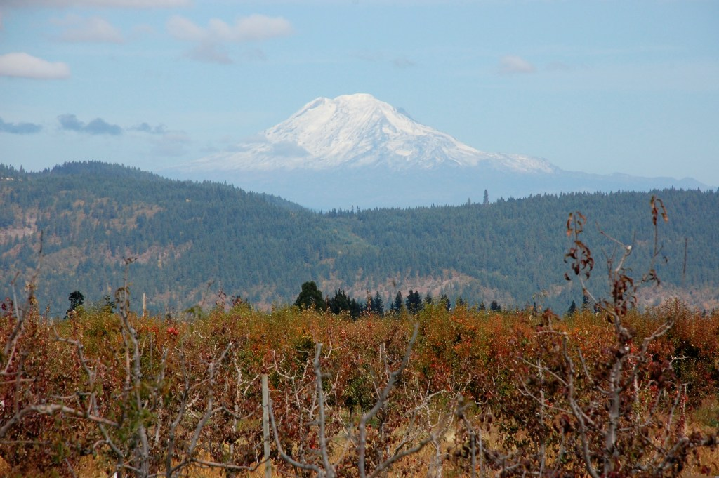 View of Mt. Adams from Kiyokawa Family Orchards | theringers.co