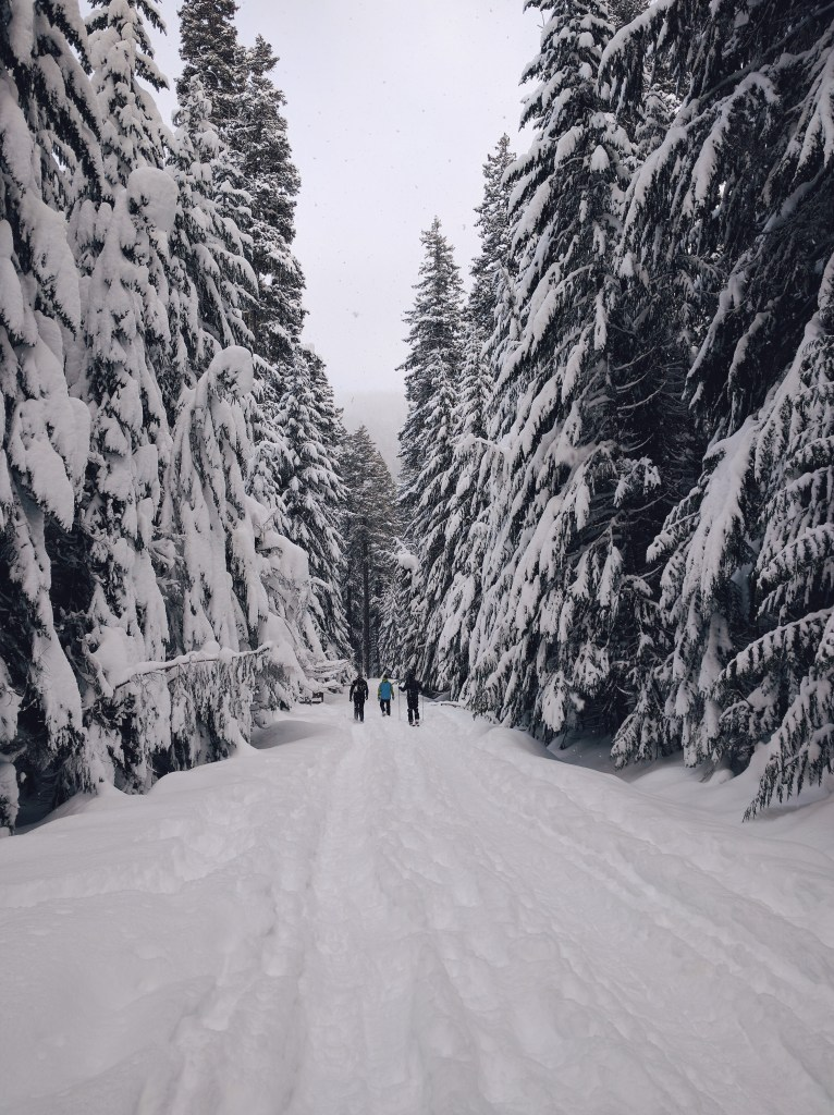Snowshoe at Mount Hood, Oregon | theringers.co