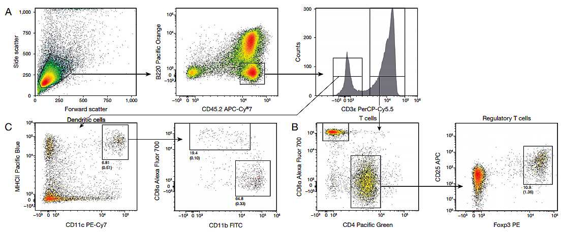 Multiparameter Analysis of Murine Regulatory T Cells and