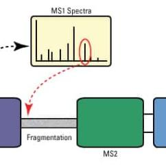 Schematic Diagram Of Mass Spectrometer Roper Dryer Wiring Medical Microbiology Lab Series 13 Spectrometry Fig 7 Illustration Tandem Ms