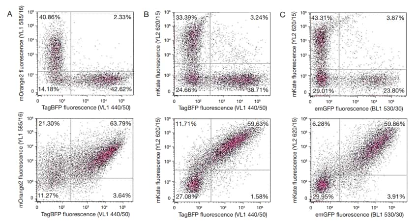 Detection of Fluorescent Proteins Using the Attune NxT