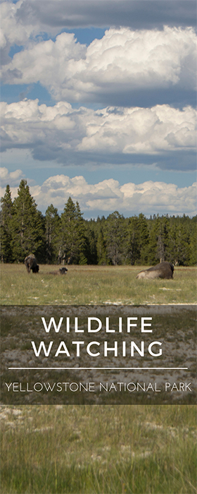 Wildlife Watching in Yellowstone National Park - The Road