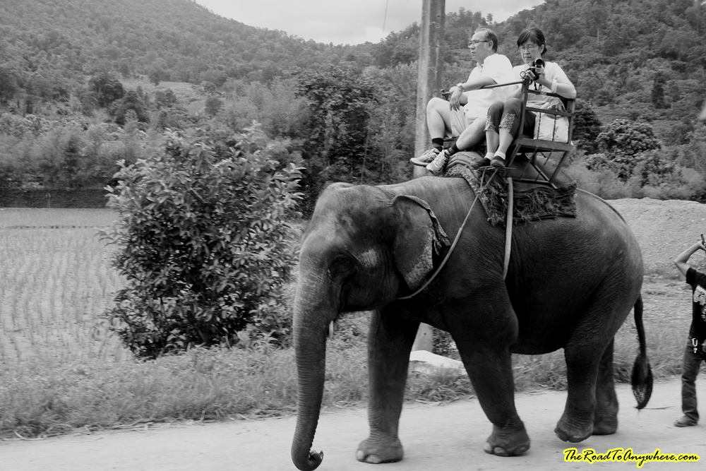 Elephant riding at an elephant camp near Chiang Mai, Thailand