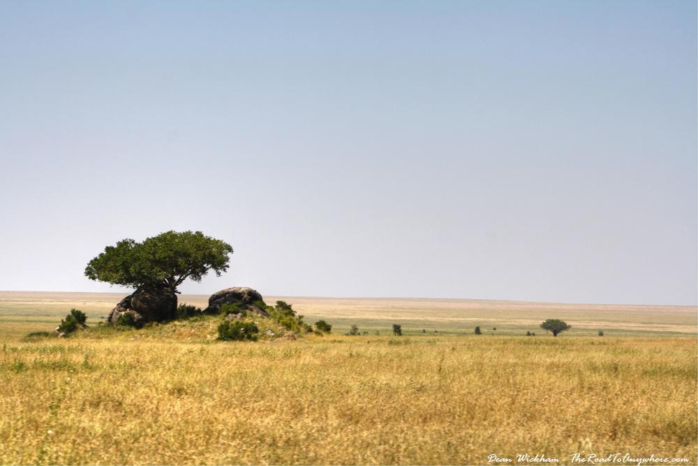 Grasslands of the Serengeti Plain, Tanzania