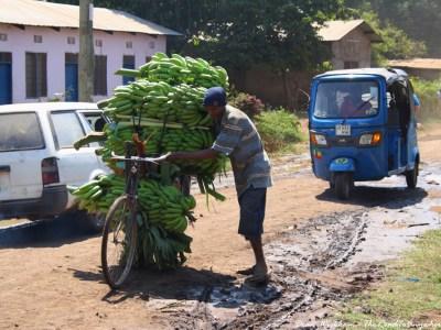 A man pushes a bicycle piled high with bananas in Mto wa Mbu, Tanzania