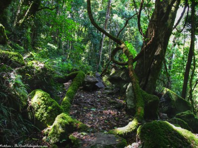 Walking in the rain forest on Mount Mitchell in Main Range National Park, Australia