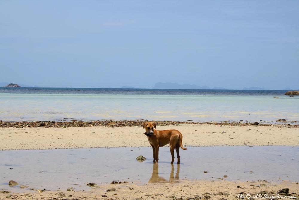 A dog on Ao Chao Phao Beach on Koh Phangan, Thailand