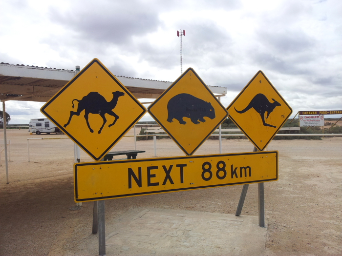 Nullarbor Road Sign warning of camels, wombats and kangaroos