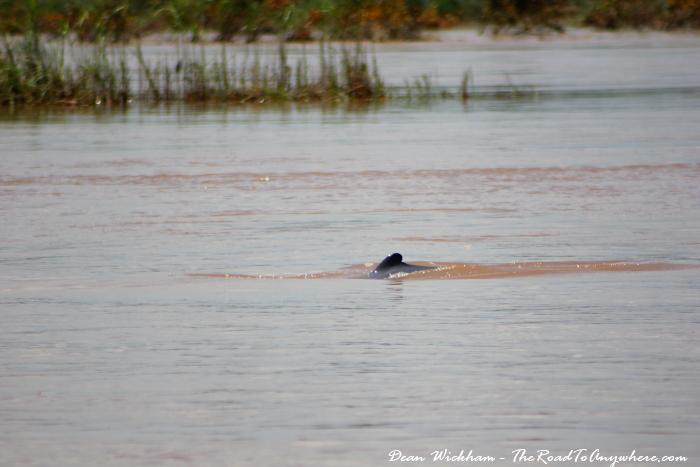 Fin of Irrawaddy Dolphins in the Mekong River in Cambodia