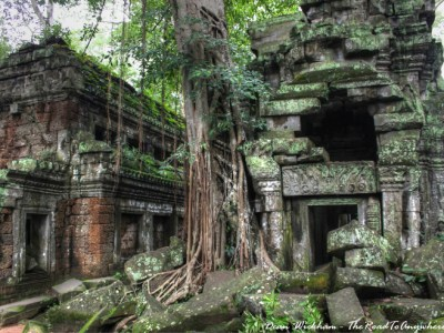 Ancient jungle ruins at Ta Phrom in Angkor, Cambodia