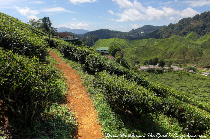Path in a tea plantation in the Cameron Highlands, Malaysia